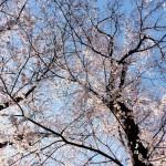 春めかしいもの