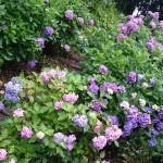 6月の花見