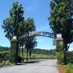 コッポラのワインラインナップ